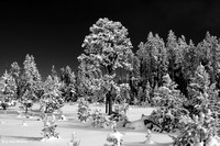 0158 90 Fresh Snow in the Park BW