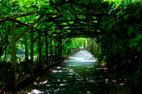 Vine Covered Walkway in Central Park